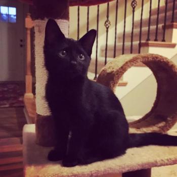 Loki Baby